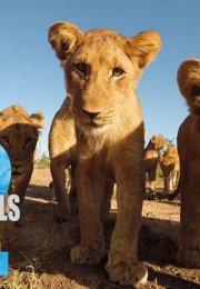 72 Cutest Animals 1. Sezon 4. Bölüm